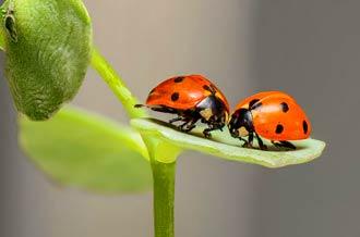 Wie zwei Marienkäfer auf einem Blatt berührt und ergänzt sich das Therapeutenpaar der Heilpraxis Maier